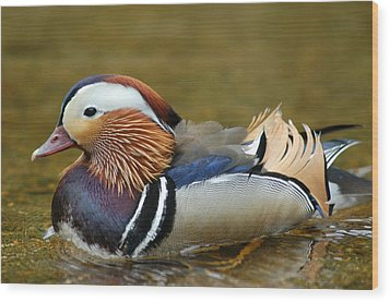 Beautiful Fowl Wood Print by Pat Knieff
