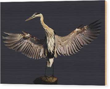 Beautiful Great Blue Heron - # 16 Wood Print by Paulette Thomas