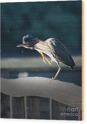 Wood Print featuring the photograph Beautiful Green Heron by Anita Oakley