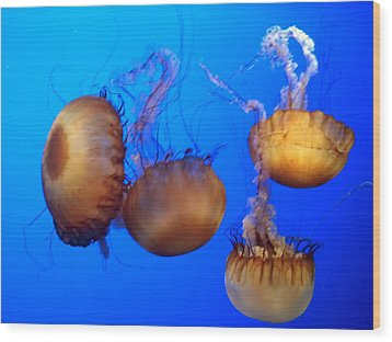 Wood Print featuring the photograph Beautiful Jellyfish by Janice Spivey