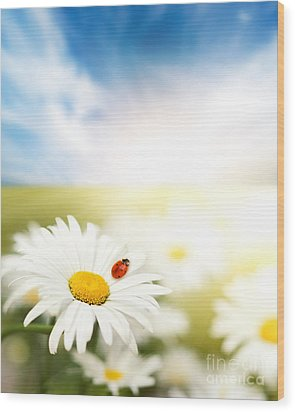 Beautiful Ladybug And Beautiful Flower Wood Print by Boon Mee