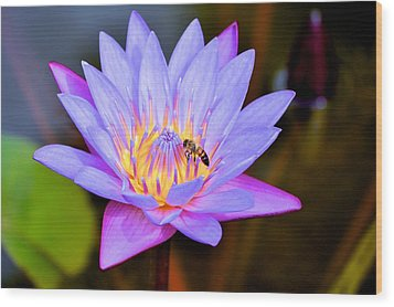 Beautiful Lily And Visiting Bee Wood Print by Kristina Deane