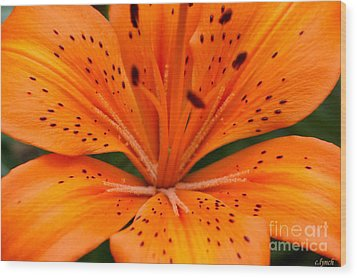 Beautiful Lily Wood Print by Carol Lynch