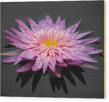 Beautiful Lily Wood Print