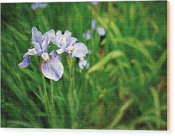 Beautiful Louisiana Hybrid Iris Wood Print by Marianne Campolongo