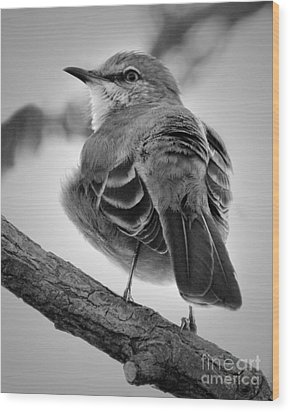 Wood Print featuring the photograph Beautiful Mockingbird by Anita Oakley