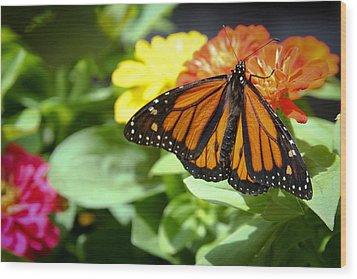Beautiful Monarch Butterfly Wood Print by Patrice Zinck