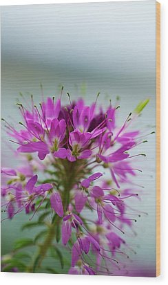 Wood Print featuring the photograph Beautiful Morning by Kevin Bone