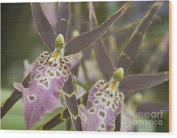 Beautiful Mtssa. Shelob 'tolkien' - Orchids - Mericlone  Wood Print by Sharon Mau