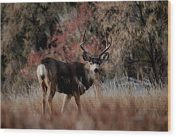 Beautiful Muley Wood Print