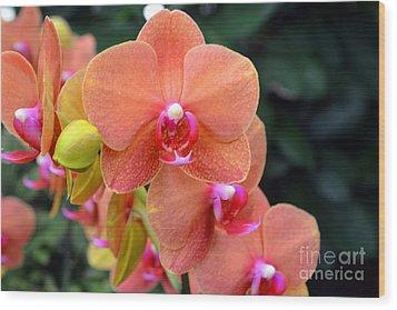 Beautiful Orchids Wood Print by Anne Marie Corbett