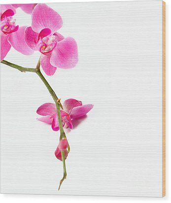 Beautiful Orchids Wood Print by Boon Mee