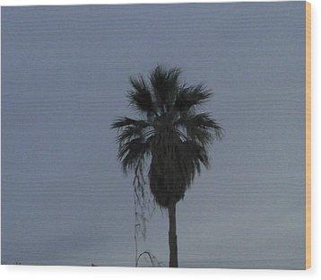 Beautiful Palm Tree Wood Print by Rebekah Luper