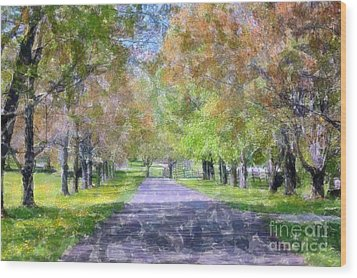 Beautiful Pathway Wood Print by Kathleen Struckle