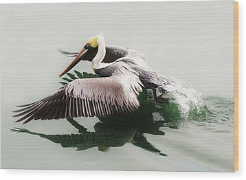 Beautiful Pelican Wood Print by Paulette Thomas
