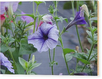 Wood Print featuring the photograph Beautiful Petunias by Wilma  Birdwell