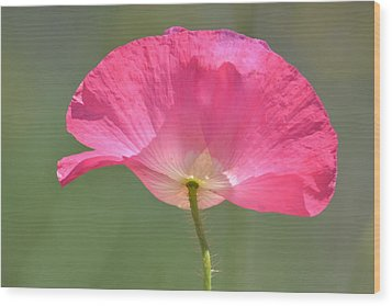 Beautiful Pink Poppy Flower Wood Print by P S