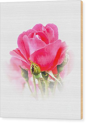 Wood Print featuring the photograph Beautiful Rose by Anita Oakley