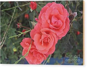 Wood Print featuring the photograph Beautiful Roses by Cendrine Marrouat