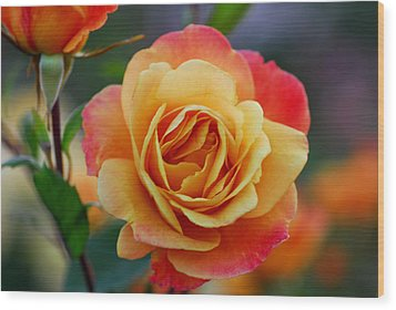Beautiful Roses Wood Print by Jean-Jacques Thebault
