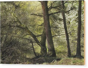 Beautiful Spring Trees Wood Print
