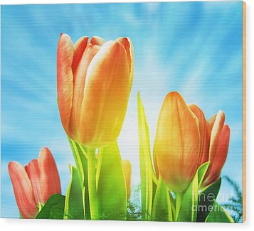 Beautiful Spring Tulips Background Wood Print by Michal Bednarek
