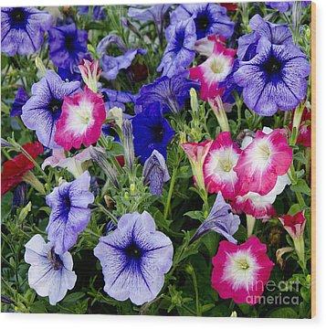Beautiful Summer Annuals Wood Print by Wilma  Birdwell