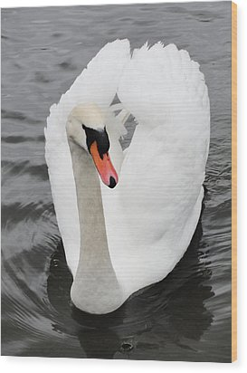 Wood Print featuring the photograph Beautiful Swan by Tiffany Erdman