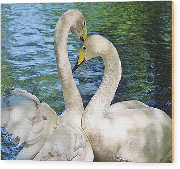 Beautiful Swans Wood Print by Paulette Thomas