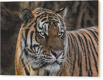 Wood Print featuring the photograph Beautiful Tiger Photograph by Tracie Kaska