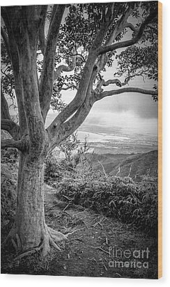 Beautiful Tree Looking Down On A Tropical Valley Wood Print by Edward Fielding