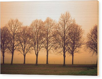 Beautiful Trees In The Fall Wood Print by Tommytechno Sweden
