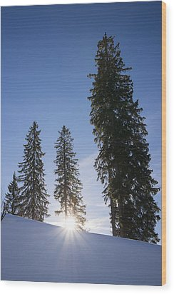Beautiful Trees On A Sunny Winter Day Wood Print by Matthias Hauser