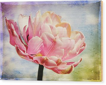 Wood Print featuring the photograph Beautiful Tulip by Trina  Ansel