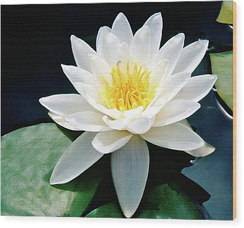 Beautiful Water Lily Capture Wood Print by Ed  Riche