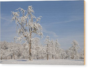 Beautiful Winter Day With Snow Covered Trees And Blue Sky Wood Print by Matthias Hauser