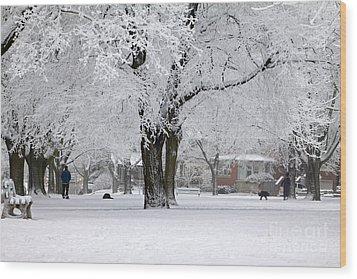 Beautiful Winter Park Wood Print by Charline Xia