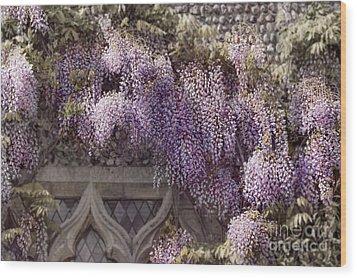 Beautiful Wisteria Wood Print by Svetlana Sewell