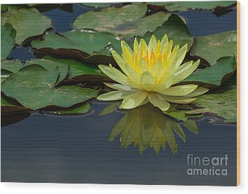 Beautiful Yellow Water Lily Wood Print by Tosporn Preede