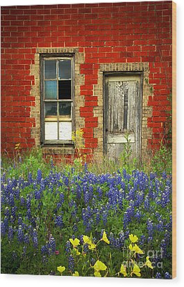 Beauty And The Door - Texas Bluebonnets Wildflowers Landscape Door Flowers Wood Print by Jon Holiday