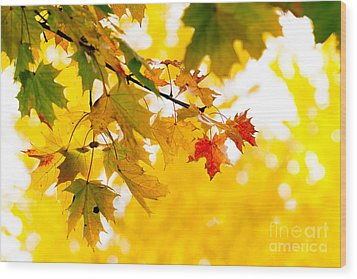 beauty Autumn Leaves Wood Print by Boon Mee