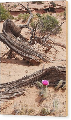 Beauty Blooming Wood Print