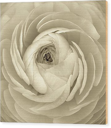 Wood Print featuring the photograph Beauty by Colleen Williams