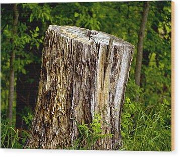 Beauty Endures Wood Print by Larry Capra
