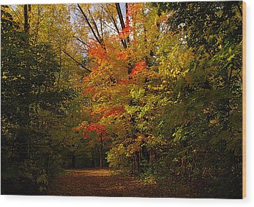 Beauty In The Woods Wood Print by Jocelyne Choquette
