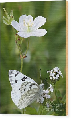 Beauty In White Wood Print