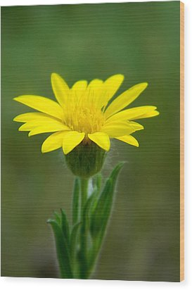 Beauty In Yellow Wood Print by Ester  Rogers