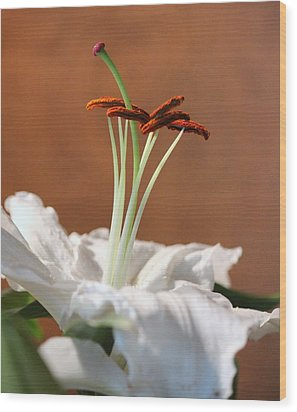 Beauty Of A Lily Wood Print by Rosanne Jordan
