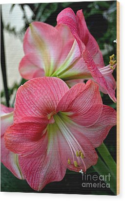 Beauty Of An Amaryllis Flower Wood Print