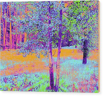 Beauty Of An Aspen Grove Wood Print by Ann Johndro-Collins
